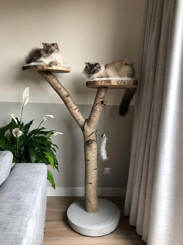 Cat-furniture-using-trunk