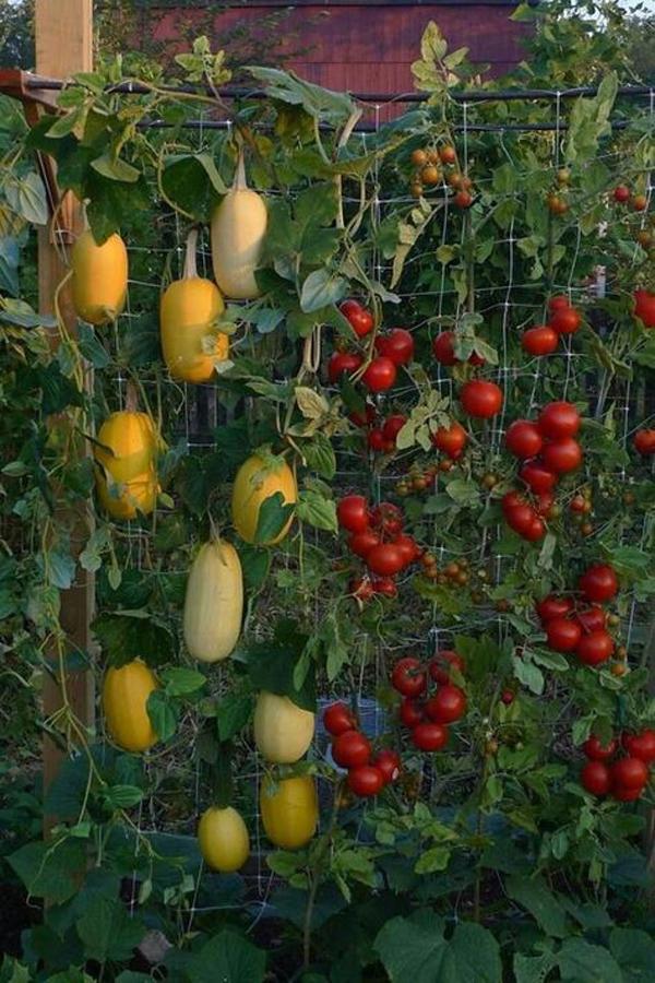 Outdoor-vertical-gardening-ideas